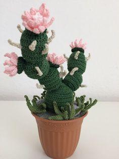 Una pianta grassa della innumerevoli e particolari forme che attira numerosi collezionisti, si chiama theprocactucs. Questo genere di pia...