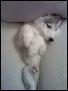 My couch gave birth to a puppy. Video: http://www.youtube.com/watch?v=ugSJHtv-C0A