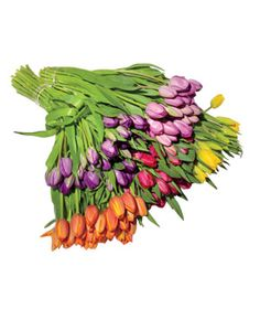 Grand Box of 120 Tulips (Click through for an exclusive discount)