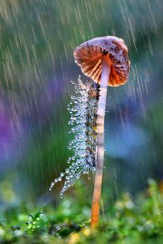 Mushroom spider web dew