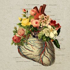 I like the mixture of the anatomy and flowers - Collage Art- I've been working on a similar concept with watercolors, ink, & pressed flowers Love it! Art And Illustration, Illustrations, Medical Illustration, Collages, Collage Art, Heart Collage, Surreal Collage, Flower Collage, Travis Bedel