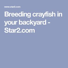 Breeding crayfish in your backyard - Star2.com