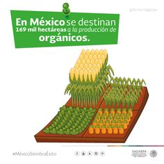 En México se destinan 169 mil hectáreas ala producción de orgánicos. SAGARPA SAGARPAMX #MéxicoSiembraÉxito