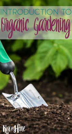 A Beginner\'s Guide to Organic Gardening