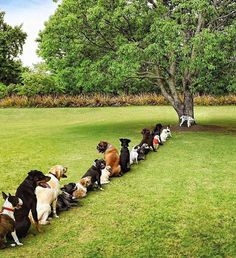 This is what the line to the women's restroom looks like...