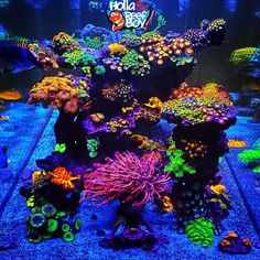 The Ecotech Radions (AB+ template) comes on. Coral Reef Aquarium, Saltwater Aquarium Fish, Saltwater Tank, Marine Aquarium, Aquarium Fish Tank, Planted Aquarium, Nano Reef Tank, Reef Tanks, Marine Fish Tanks