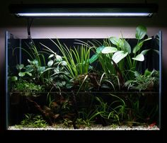 Aquascaping is much more than just a term to describe the setting up and decorating of an aesthetically pleasing aquarium - it is the act of creating perfect nature-mimicking habitats for the fish we keep in our tanks. Nature Aquarium, Home Aquarium, Aquarium Fish Tank, Planted Aquarium, Fish Tanks, Paludarium, Vivarium, Indoor Garden, Indoor Plants