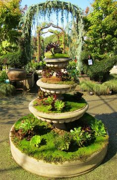 Succulent planting in fountain, via Sweetstuff's Sassy Succulents (taken at High Hand Nursery)