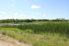 A sunny day overlooking the marsh at Brandon Riverbank Discovery Center  |  1 - 545 Conservation
