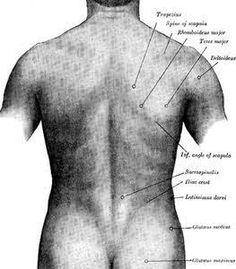 Pain 101: Mid-Back & Rib Pain - CBPT