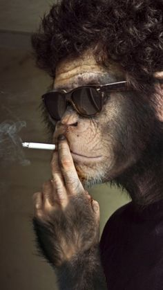 """I didn't choose the thug life. The thug life chose me. Monkey Pictures, Funny Animal Pictures, Animals And Pets, Funny Animals, Cute Animals, Monkey Wallpaper, Monkey Art, Planet Of The Apes, Thug Life"