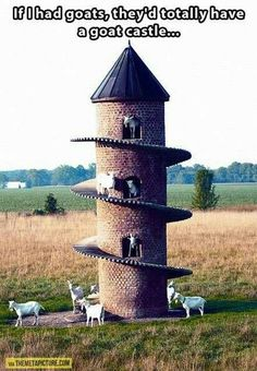 Goat castle for goats!