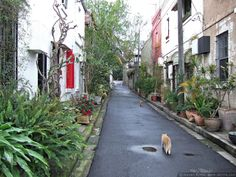 Surry Hills green laneway