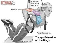 TRICEPS-EXTENSIONS-WITH-RINGS-insHP.jpg 400×300 píxeles