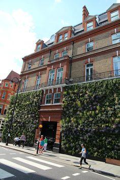 Een groene en bloeiende plantenwand in Londen.