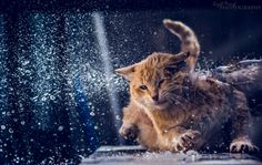 wet kitty by layth raoof