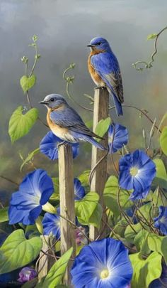 Ideas painting love birds bluebirds for 2019 Pretty Birds, Love Birds, Beautiful Birds, Beautiful Family, Simply Beautiful, Beautiful Images, Tier Fotos, Colorful Birds, Exotic Birds