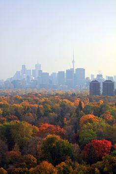 Autumn in Toronto, Ontario, Canada Ontario, O Canada, Canada Travel, Downtown Toronto, Toronto Skyline, Toronto High Park, Toronto City, The Places Youll Go, Places To Visit