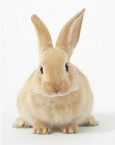 Important Pointers For New Rabbit Owners:    1. Know the proper food and drink to provide to them (carrots and leafy vegetables like spinach and...