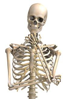Skelettet, ikke adrenalin, igangsætter stress