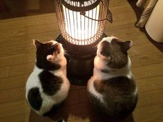 .kittens & a heater | 埋め込み画像.