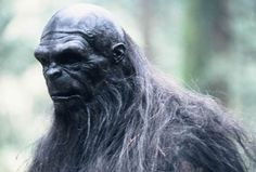 guess even bigfoot has balding issues!!