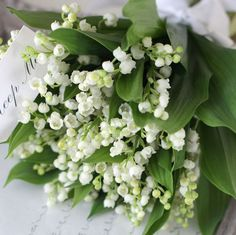 ◆ May Flowers, Beautiful Flowers, White House Garden, Floral Wedding, Wedding Flowers, Kangaroo Paw, Heuchera, Lily Of The Valley, Floral Arrangements