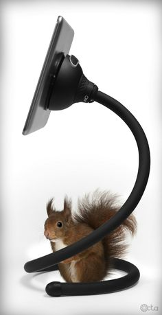 Squirrel with a Galaxy Tab and a TabletTail: Monkey Kit