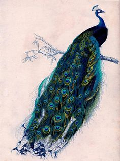 Beautiful Peacock Cross Stitch Pattern  LOOK