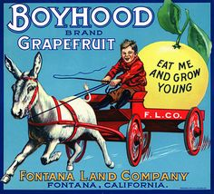 This fruit crate label was used on Boyhood Grapefruit, c. 1920s: 'Boyhood Brand Grapefruit. Eat Me and Grow Strong. Fontana Land Company. Fontana, California.' Crate labels were a frequent means of ma