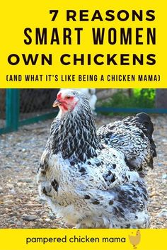 Thinking about keeping chickens as pets? Here's what you need to know!