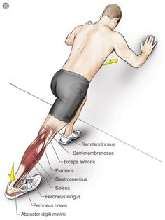 Wall calf stretch: gastrocnemius muscle. Fitness Workouts, Fitness Diet, Yoga Fitness, Stretches Before Workout, Stretching Exercises, Muscle Anatomy, Killer Workouts, Flexibility Workout, Leg Workouts
