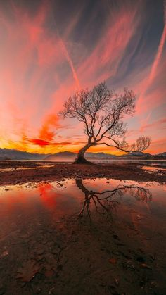 The Tree, Wanaka, New Zealand, Vertical Panorama – Photography Scenery Photography, Landscape Photography Tips, Landscape Photos, Amazing Photography, Photography Jobs, Travel Photography, Photography Backdrops, Photography Contract, Landscape Lighting