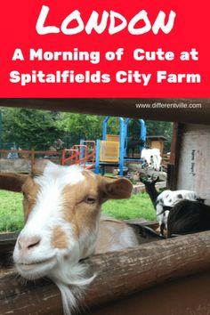 With its friendly goats, cuddly pigs and sheep who live in a phone box, Spitalfields City Farm should be top on your list of things to do in East London. And, amazingly, its just steps away from Brick Lane. Next London, East End London, New Travel, London Travel, Travel Tips, Hidden London, Stuff To Do, Things To Do, Unusual Hotels