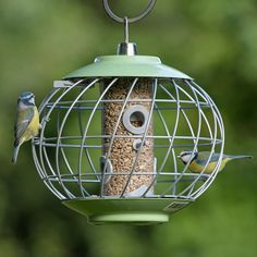 Helix seed feeder