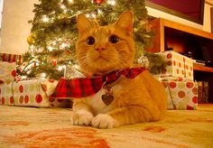 <b>Christmas is a time of cats.</b> OK, that's not strictly accurate, but here's a whole bunch of them acting like it is. Here's wishing a very Merry Christmas to you and to the cats in your life!