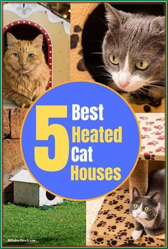 (paid link) Cat Houses: Indoor & uncovered Cat Houses #cathouseoutdoor