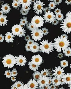 A daisy in a field of shadows. Daisy Wallpaper, Cloud Wallpaper, Aesthetic Wallpapers, Beautiful Flowers, White Flowers, Planting Flowers, Bloom, Nature, Pictures