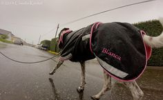 a lot of rain! #dogs #doglovers