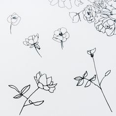 floral squiggles / paper & type
