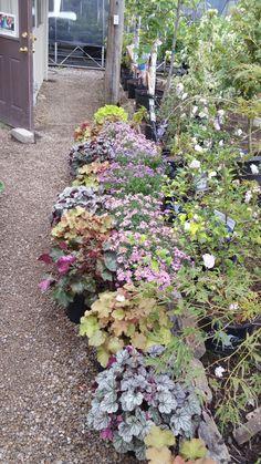 Local Plant Source Catalog