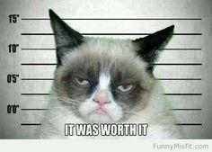 grumpy cat humor funny meme joke