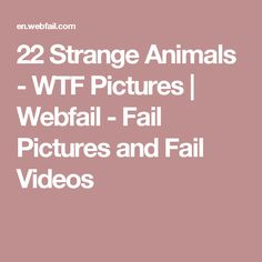 22 Strange Animals - WTF Pictures | Webfail - Fail Pictures and Fail Videos