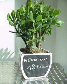 laurier rose pour tous les animaux la plante est extr mement toxique des feuilles au tronc et. Black Bedroom Furniture Sets. Home Design Ideas