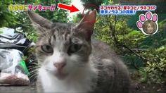 トコトン掘り下げ隊!生き物にサンキュー!!すごくかわいい子猫 #1! 2017年8月12日