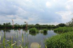O excesso e a falta de água ocasionam problemas nas plantas - veja porque no blog Jardim de Helena - Ecossistema de lago com plantas aquáticas