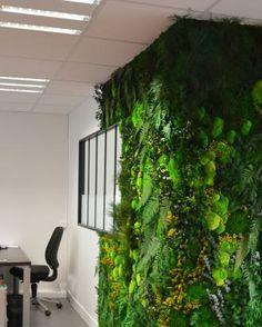 """Озеленение офиса. Мы сделаем интерьер """"живым""""!"""