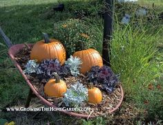 Why not throw in some mums, coreopsis, and kale to your fall decor!