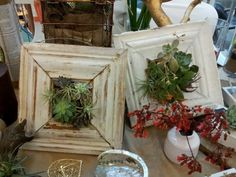 succulents in frames | Succulents in a frame | Garden