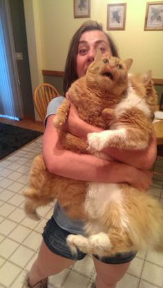 My girlfriend attempted to hold both of her cats at once, it deteriorated quickly. - Imgur